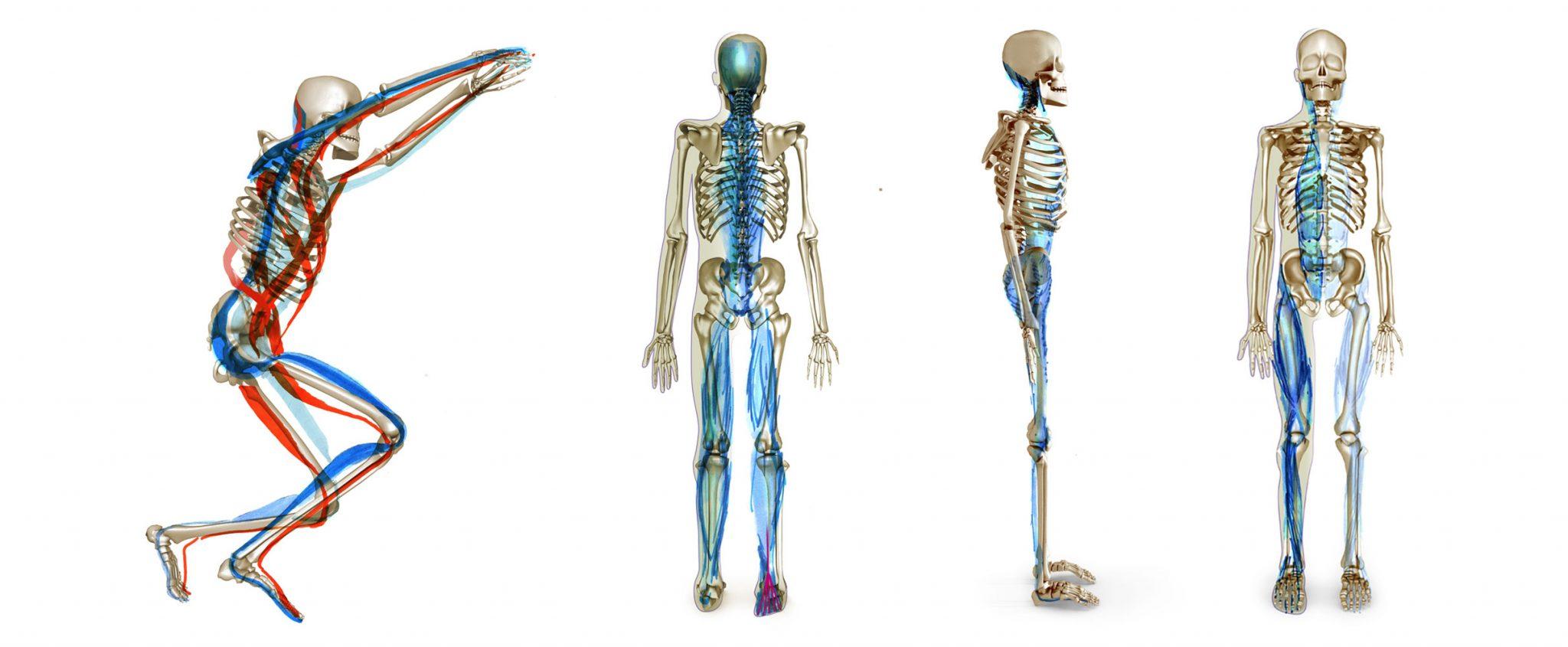 Skelett_Bammes-Stellung
